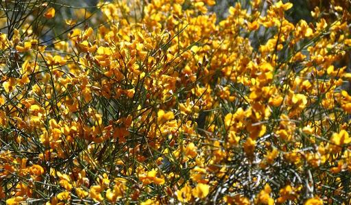 roma outback flora fauna